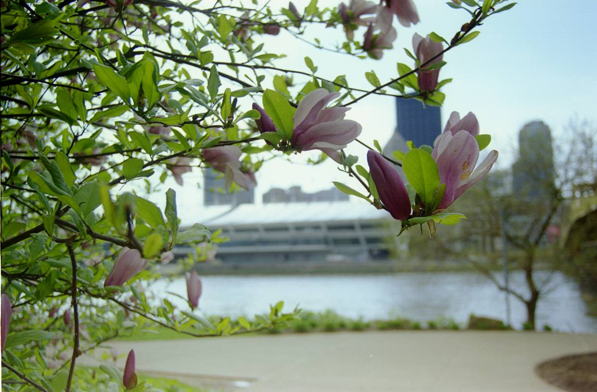 Spring flowers bloom across the Allegheny River from the David L. Lawrence Convention Center. A UMNS photo by Rasul Welch