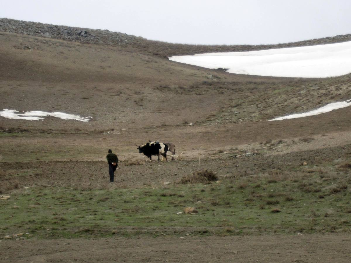 One of the community development programs in the central highlands of Afghanistan is crop experimentation for high-elevation agriculture.