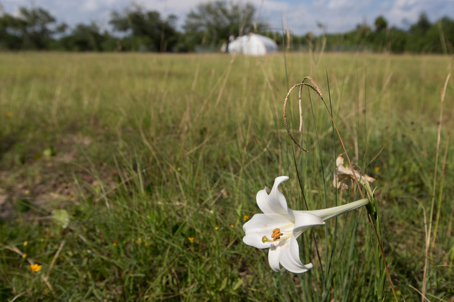 A lily blooms in an empty field at Gulfside Assembly in Waveland, Miss. The retreat center, which was destroyed by Hurricane Katrina, once served black Methodists from the church's Central Jurisdiction during the segregation era. Photo by Mike DuBose, UMNS.