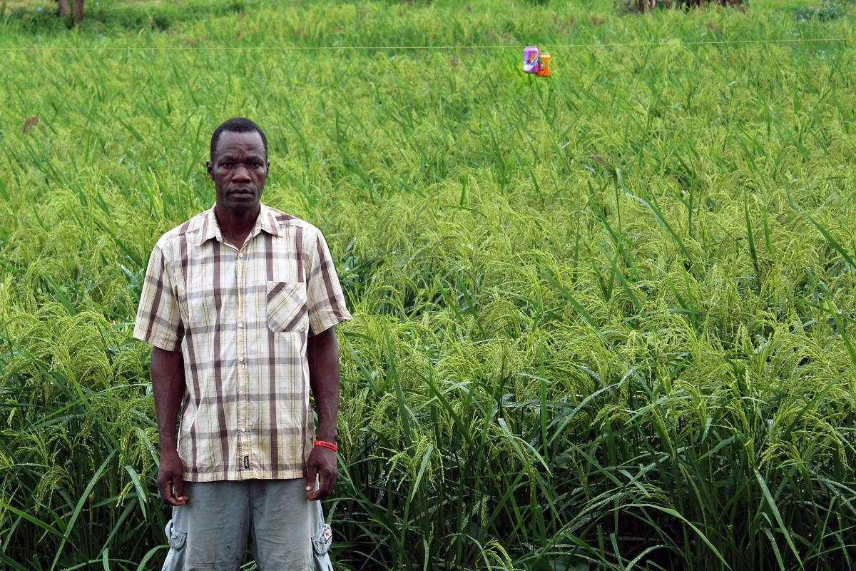 Gontorwon Neahn is one of the contractors tending the Gbarnga Mission Station swamp rice field in Liberia. The harvest from the mission station will supply most of the farmers with seed rice in the Gbarnga area. Photo by Julu Swen, UMNS.