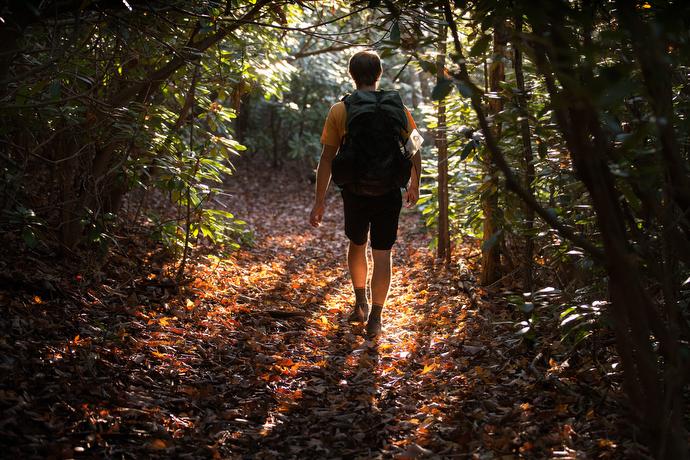 at-chaplain-12 The Rev. Matt Hall hikes through a grove of rhododendron on the Appalachian Trail near Pearisburg, Va.