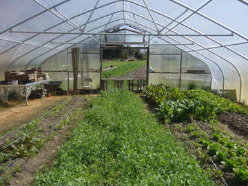 The greenhouse at Anathoth Community Garden in Cedar Grove, N.C.