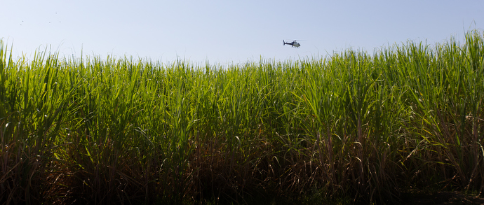 A helicopter from U.S. Customs and Border Protection's Air and Marine Operations agency flies over a sugar cane field where people who crossed into the United States illegally are hiding along the Rio Grande near McAllen. Photo by Mike DuBose, UMNS.