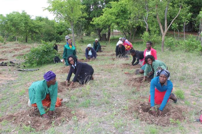 Communities around Buwerimwe village school in Zimbabwe are planting trees to help maintain forests in the fight against climate change. Photo by Kudzai Chingwe, UMNS
