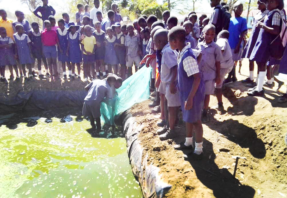 Students from Nyadire Primary School harvest fish at The United Methodist Church's Nyadire Mission in Zimbabwe. The children are learning how to run a fish-breeding business as part of a school project in agriculture. Photo by Chenayi Kumuterera.