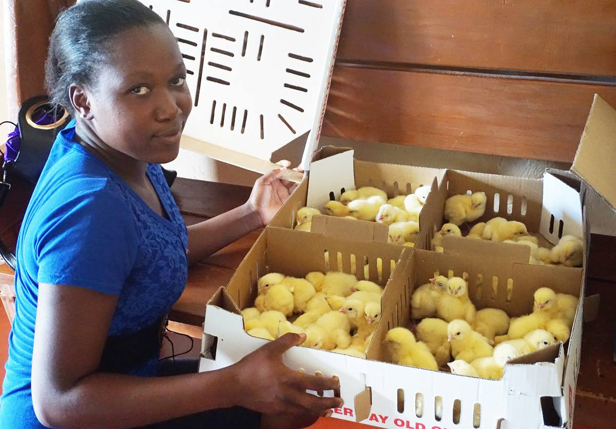 Tendai Musandaka, 20, holds a box of chicks that she and other women and girls will raise to generate income in Marange, Zimbabwe, which has been affected by drought. The farming program is led by The United Methodist Church's Ministry with Women, Youth and Children and funded by the United Methodist Committee on Relief. Photo by Kudzai Chingwe, UMNS.