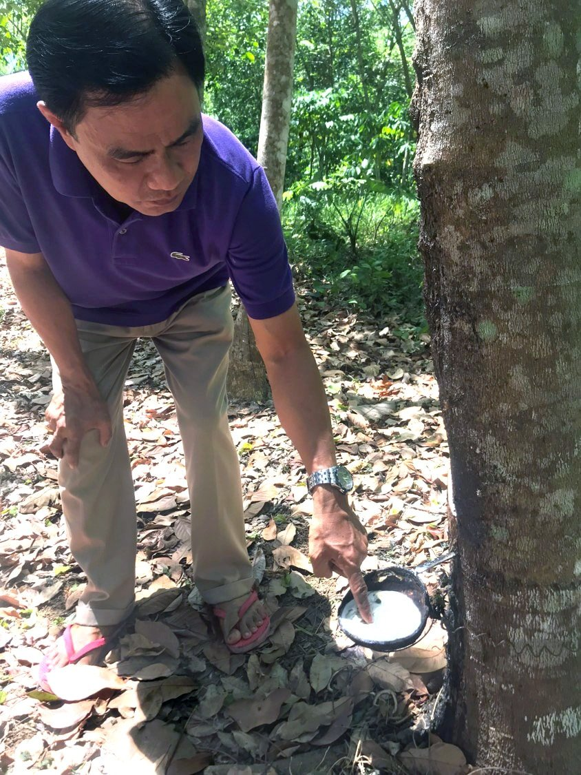 """Bishop Rodolfo Alfonso """"Rudy"""" Juan crouches near a rubber tree during a visit by United Methodists to his Davao Area in southern Philippines. The Davao Area has launched a number of income-generating projects to support ministry, including tapping rubber trees. Photo by Bishop Harald Rückert of Germany."""