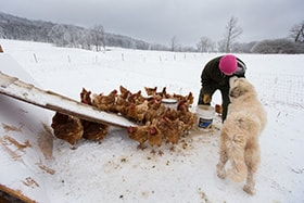 Andy, a recovering addict, gets a smooch from guard dog Tundra while feeding chickens at Brookside Farm, part of the Jacob's Ladder rehabilitation program in Aurora, W.Va. Photo by Mike DuBose, UMNS.