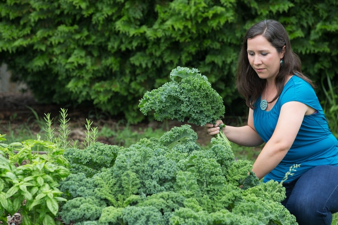 Rachael Porter harvests kale from the community garden at Concord United Methodist Church in Athens, W.Va. Porter, whose husband pastors the church, founded a nonprofit that will aid people in recovery by growing, processing and selling tea. Photo by Mike DuBose, UMNS.