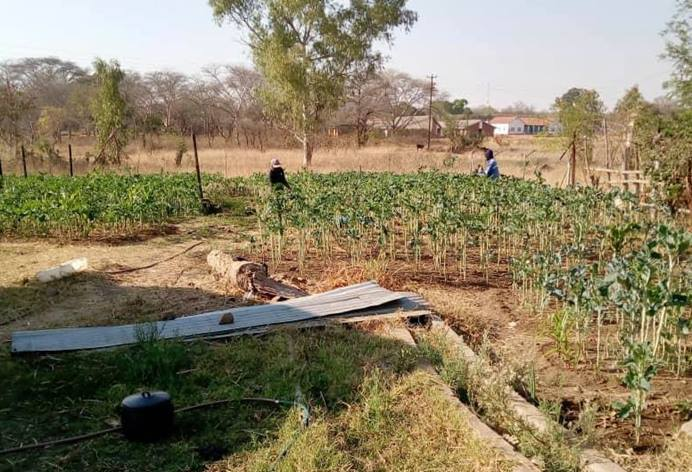 Workers tend to vegetables planted at the Nyadire Mission farm in Nyadire, Zimbabwe. The farm was among six United Methodist properties evaluated during a land audit by the Zimbabwe Episcopal Area. Photo by Chenayi Kumuterera, UM News.