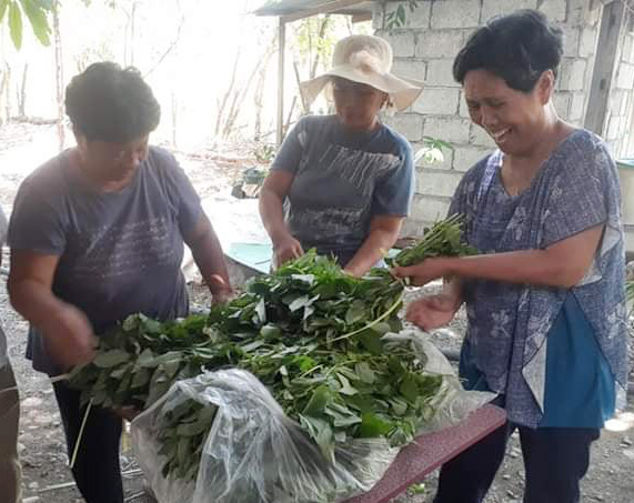 The Tawid Buhay Project, a ministry of the North East Central Luzon District, distributes vegetables to people in need, including United Methodist church volunteers and frontline workers at quarantine control points. Photo courtesy of the Rev. Feliciano M. Biasbas.