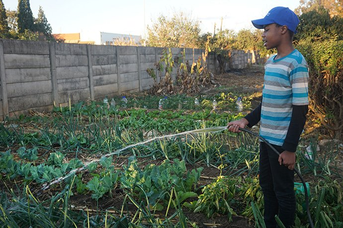 United Methodist Nokutenda Mudzengerere, 14, waters his backyard garden in Harare, Zimbabwe, where he is producing organic vegetables during the lockdown. Photo by Kudzai Chingwe, UM News.