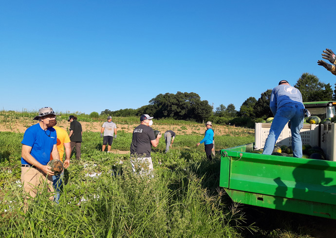 """Volunteers, including a group from DPR Construction, """"toss"""" watermelons to get them from the field to the wagon at Barbee Farms in North Carolina. Photo courtesy of the Rev. Michael Binger, North Carolina regional director of the Society of St. Andrew."""