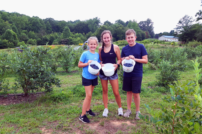 Three young gleaners from Dilworth United Methodist Church hold buckets of fresh-picked blueberries at Raceway Berry Farm in Lincoln County, N.C. The Society of St. Andrew, which receives produce from Raceway and other farms, is helping get food to needy citizens. Photo courtesy of the Rev. Michael Binger, North Carolina regional director of the Society of St. Andrew.