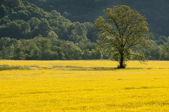 Spring flowers bloom in a farm field near Ashland City, Tenn., in 2020. Agencies of The United Methodist Church are committed to achieving net-zero greenhouse gas emissions by 2050, a goal announced on Earth Day. File photo by Mike DuBose, UM News.