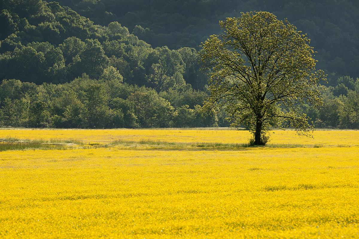 Las flores de primavera en un campo agrícola cerca de Ashland City, estado de  Tennessee. Las agencias de la Iglesia Metodista Unida están comprometidas a lograr cero emisiones netas de gases de efecto invernadero para 2050, un objetivo anunciado el Día de la Tierra. Foto de archivo de Mike DuBose, Noticias MU.