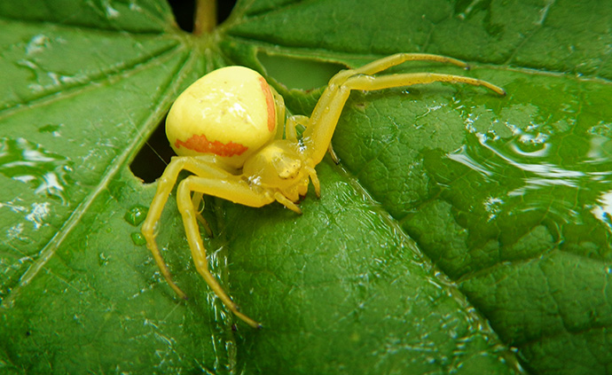 A spider rests on a leaf at the Columbia River Gorge near Cascade Locks, Ore., in 2016. File photo by Mike DuBose, UM News.