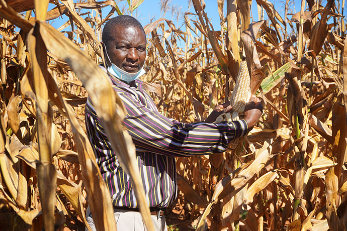 Emmanuel Chiimba checks on the maize crop at Home of Hope, the orphanage at Nyadire United Methodist Mission in Mutoko, Zimbabwe. Photo by Kudzai Chingwe, UM News.