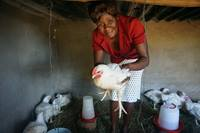 Tackilar Mawoneke holds one of the chickens she received in a partnership between United Methodists in Zimbabwe's Makoni Buhera District and Indiana's Northwest District. Photo by Kudzai Chingwe, UM News.