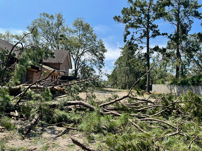 First United Methodist Church in Hammond, La., faces a major cleanup from pine trees blown down in Hurricane Ida. Photo courtesy of the Rev. Drew Sutton.